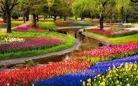 garden garden flowers inspirational colorful garden flowers hd