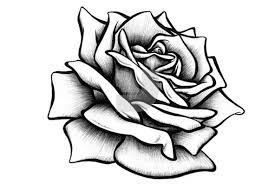 design flower rose drawing interesting design ideas drawn rose roses step by pictures flower