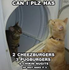 Plz Meme - can i plz has cat meme cat planet cat planet