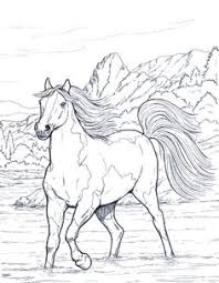 coloring pages for big kids on pinterest horse coloring pages 3100