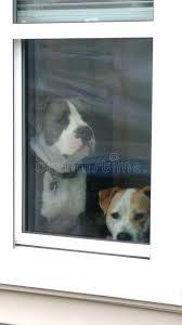 Puppy Face Meme - puppy dog face window sad face meme stock photo image of face