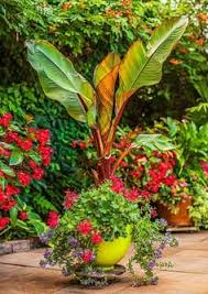 living wall for small space gardens garden container container
