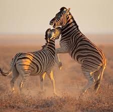 wild animals images Wild animals animal planet jpg