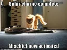 Funny Kitten Meme - kitten love meme sök på google naaaw pinterest meme
