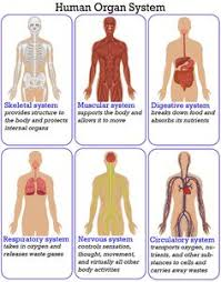 Anatomy And Physiology Human Body Skeleton Match Word Matching Page Skeletons Parents And Homeschool