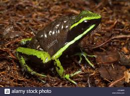 tadpole to frog stock photos u0026 tadpole to frog stock images alamy