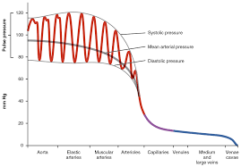 Blood Pressure Map 20 2 Blood Flow Blood Pressure And Resistance Anatomy And