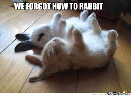 Funny Rabbit Memes - rabbit memes best collection of funny rabbit pictures