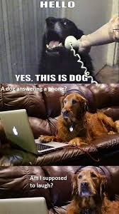 Dog Phone Meme - what a real dog thinks of the yes this is dog internet meme