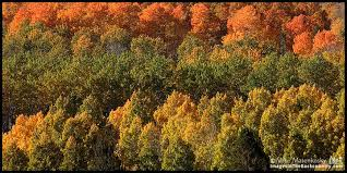eastern sierra fall colors conway summit