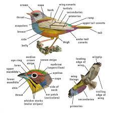 bird topography kenn kaufman field guide to birds of north