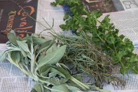 plants that keep mosquitoes away dried herbal bunches are a natural mosquito repellent hgtv