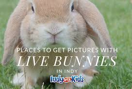 bunnies for easter best places to get pictures with live bunnies for easter