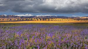 flowers wild flwers mountains spring flowers california national