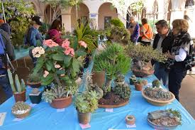 san diego native plant society san diego cactus and succulent society sdcss winter show u0026 sale