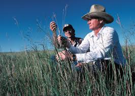 planting native grasses guidelines to produce energy grasses in wildlife friendly ways