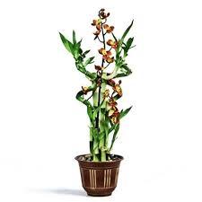 silk orchids bamboo arrangement silk flower accents