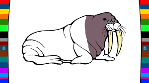 sea animals coloring pages how to draw a walrus drawing and