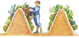 Advantage Of Raised Garden Beds - the many benefits of hugelkultur permaculture magazine