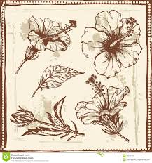 hand drawn sketch of hibiscus flowers stock vector image 44272118