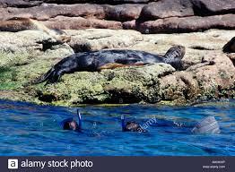 California snorkeling images Mexico baja california sur la paz isla espiritu santo jpg