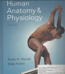 Human Anatomy And Physiology By Elaine N Marieb Human Anatomy And Physiology Elaine N Marieb Katja Hoehn