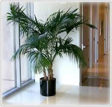 plants for office plant leasing plants for office plant service san francisco san jose