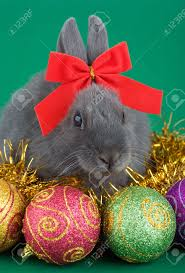 lying grey bunny wearing a red bow and christmas decorations stock