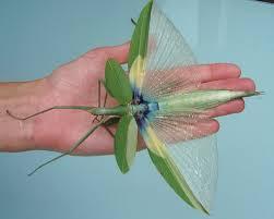praying mantis wings delicate and beautiful just like wings
