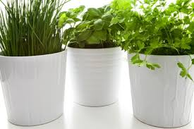 How To Arrange Indoor Plants by 8 Tips For Keeping House Plants Healthy