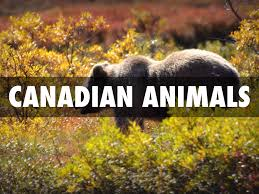 canadian animals by elvira deitg