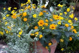 Winter Patio Plants by Top 10 Plants For Containers Gardenersworld Com