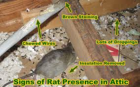 rat removal cost price and how to remove rats and mice and