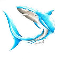 image result for blue tribal shark tattoo tattoo u0027s pinterest