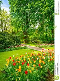 garden in keukenhof tulip flowers and trees netherlands stock