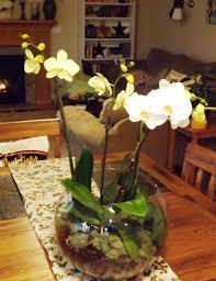orchid centerpiece orchid centerpiece heat heart home