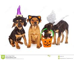 puppies dressed for halloween royalty free stock photos image