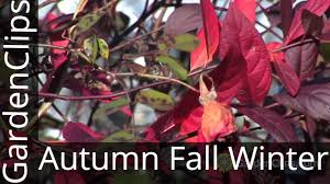 Winter Flowers For Garden by 6 Plants For Autumn Fall And Winter Interest In The Garden Youtube