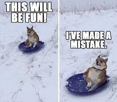 Funny Snow Meme - corgi funny in the snow z corgi pinterest corgi snow and corgis