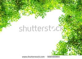 green tree branch border isolated on stock photo 568590865