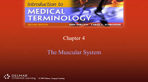 chapter 4 the muscular system ppt video online download