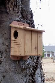 cool bird house plans house plan 12 best squirrel house images on pinterest bird