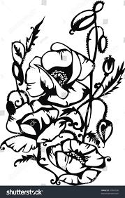 lime slice silhouette black poppy flowers silhouette on white stock illustration