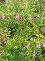 ornamental plants greens and