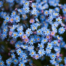 Awesome Looking Flowers Best 25 Pretty Flowers Ideas On Pinterest Beautiful Flowers