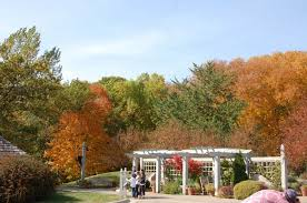 dnr predicts u0027brilliant fall color season u0027 swnewsmedia