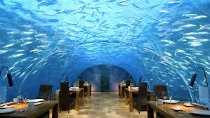 chambre aquarium dormir en compagnie des poissons infotravel fr