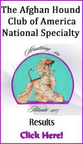 afghan hound breeders victoria results