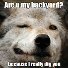 Meme Wolf - are you my backyard because i really dig you funny wolf meme picture