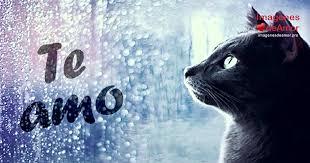 imagenes con frases de amor super tiernas 8 imágenes de gatitos tiernos con lindas frases de amor